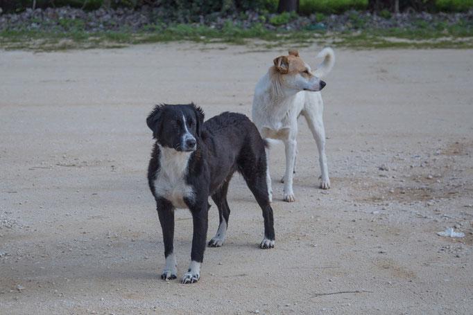 die Hunde vom Campingplatz