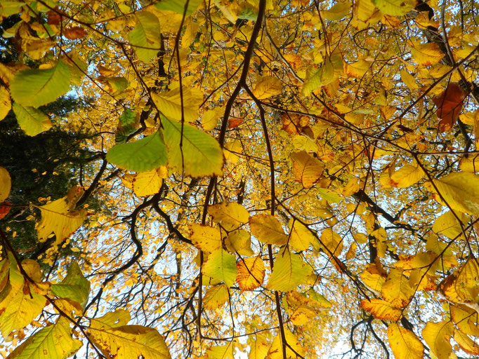 Ich sehe Bäume und Blätter, die vom Himmel fallen.
