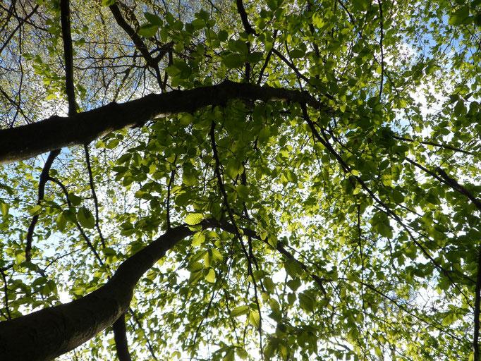 Ich sehe weiße, zarte Wolken und helles Blau. Ich sehe die Sonne. Ich sehe grüne Baumkronen und kahle Zweige. Ich sehe einen Strom gleißenden Sonnenlichts. Ich sehe das Nichts. Und ich sehe Alles.