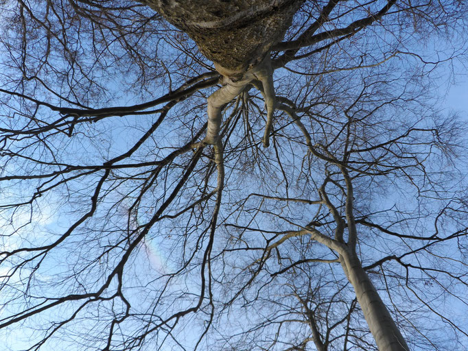 Ich sehe blauen Himmel und zarte, weiße Wolkengebilde - Wirbelsäulen, die sich ineinander (ver) schieben, bewegen, unaufhörlich, sich verändern .... .