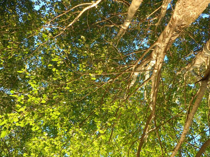 Ich sehe die Sonne und die Weite des Himmels. Er ist wunderbar blau und eine schöne Zeitlosigkeit spielgelt sich in ihm wider. Zeitloses Dasein.  Endlosigkeit. Ich sehe Endlosigkeit. Ich sehe Heilung. Ich sehe Schönheit.
