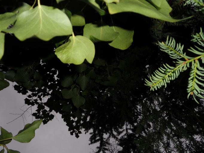 Ich sehe überall Zweige über mir.