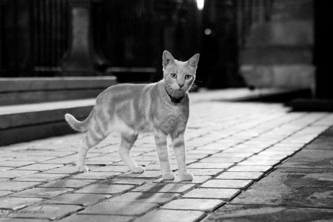 le chat de l'opéra 1