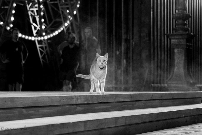 le chat de l'opéra 2