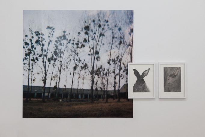 Oliver Möst · Hamlet / Dorf _ 2C Fotografie, 2008 | Manfred Michl · General Woundwort & Fiver, je Zeichenkohle Pastellkreide auf Papier, 2018
