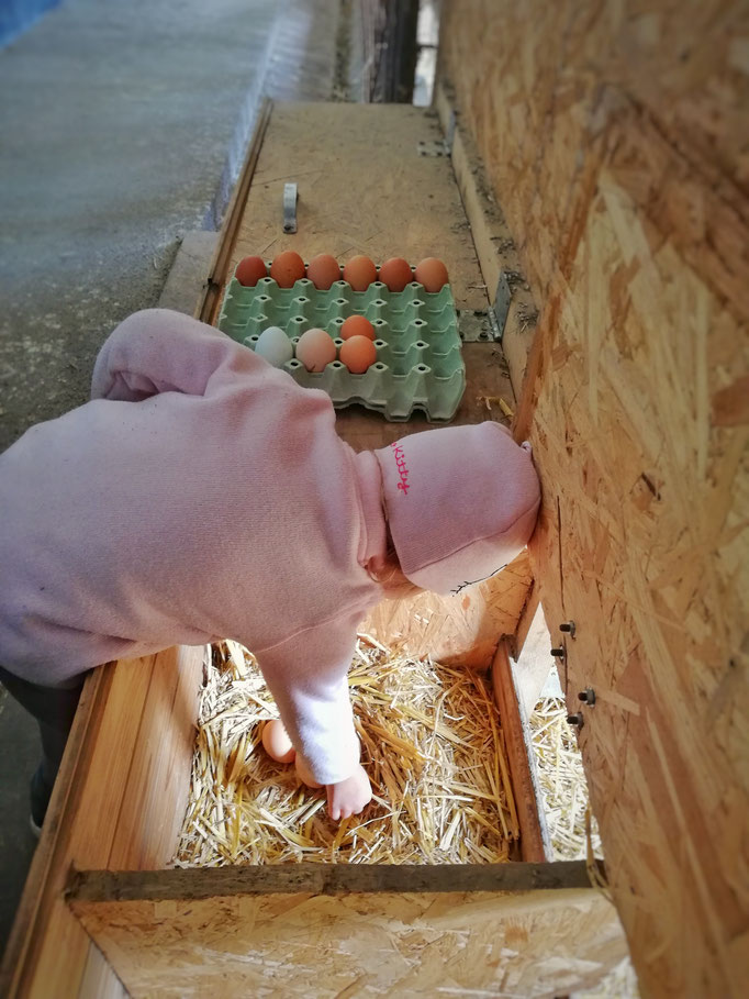 Lara beim Eier abnehmen