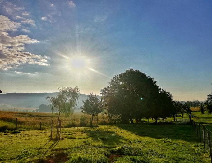 Sonnenaufgang auf der Weide