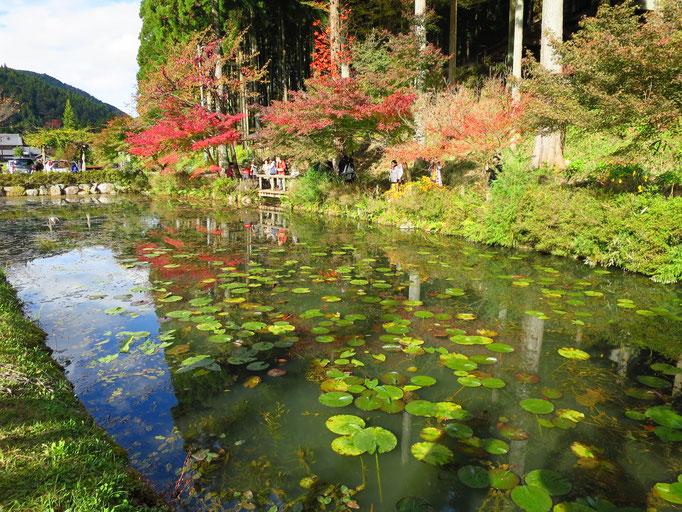 日本版モネの池