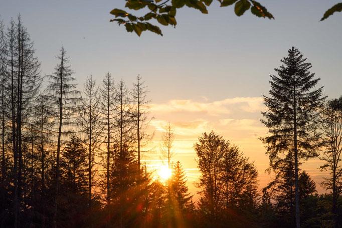 Böhmerwald im Abendrot