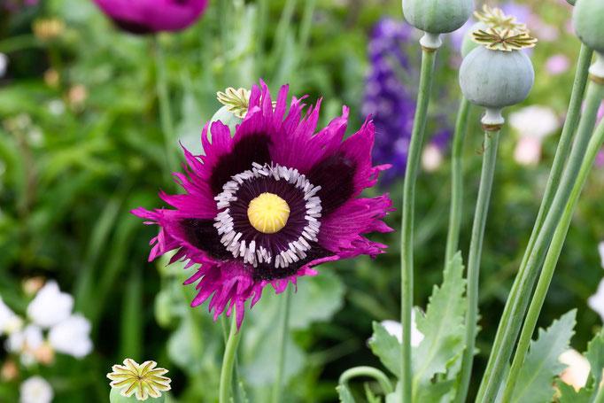 ..mit wunderschönen Gärten