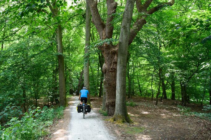 Radweg in Meppen