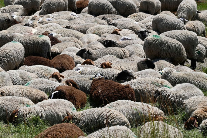 es ist viel zu heiß für soviel Wolle, da hilft nur kuscheln