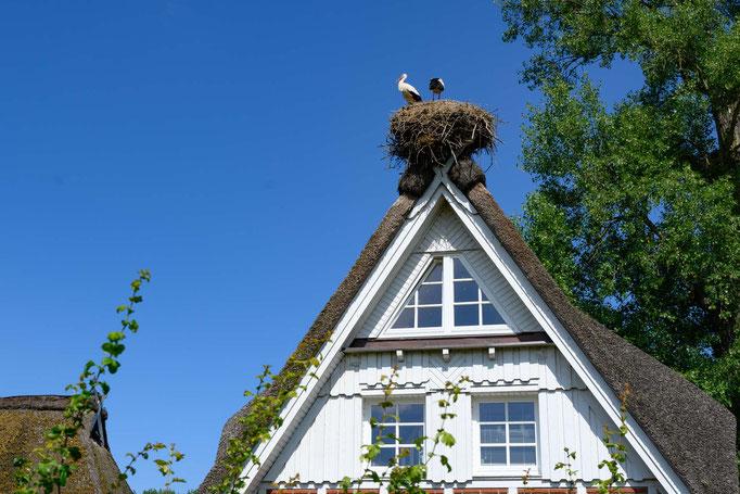 Storchen Nester auf vielen Dächern