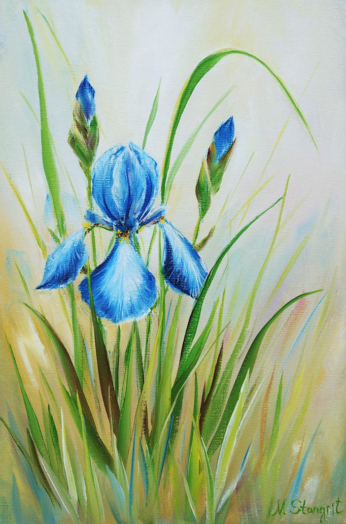 Iris.  Oil on canvas. 20x30cm, 05-2017 Sold!
