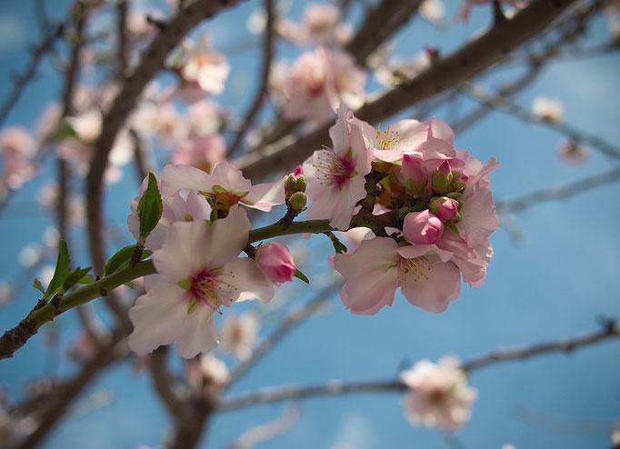 Blossom 5, 02-2013