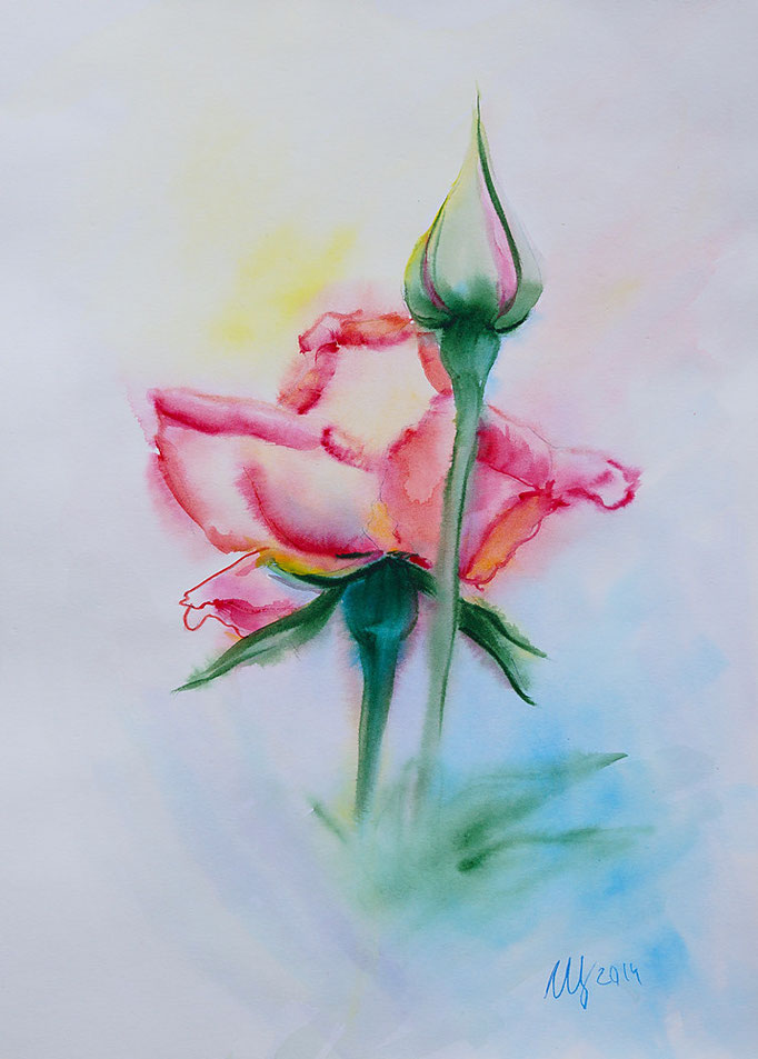 Pink Rose. Watercolor on paper. 30x40 cm. 2014