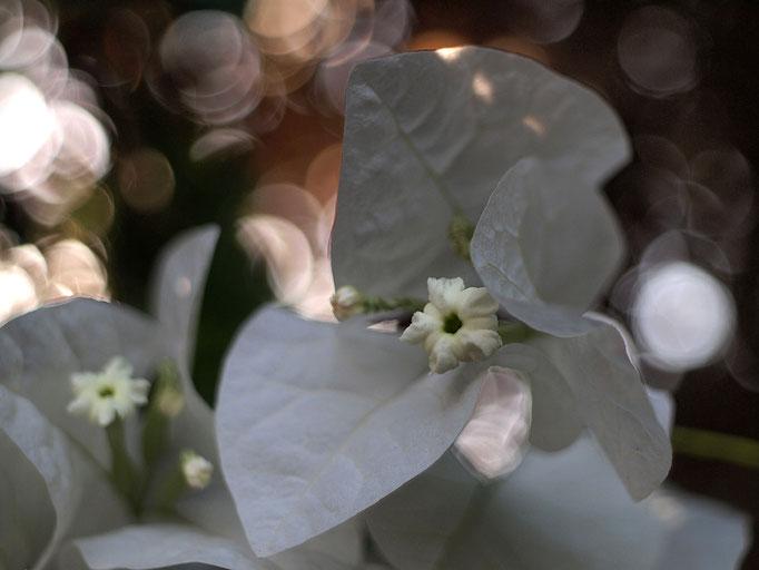White. 2011