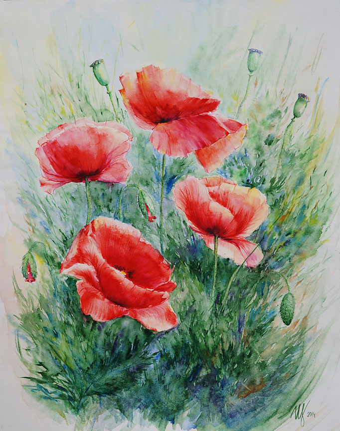 Red Poppy 3. Watercolor on paper. 16X20 in(40x50 cm). 2014
