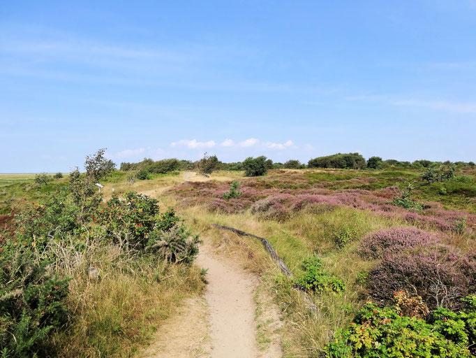 Die Duhner Heide mit dem Fahrrad entdecken