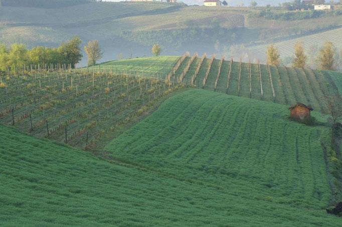 Primavera nelle Vigne-Vignale Monferrato