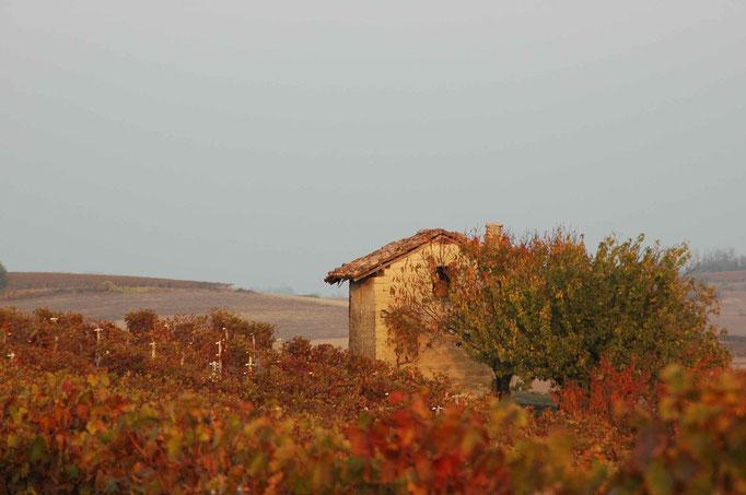 Casot nelle vigne in autunno- Vignale Monferrato
