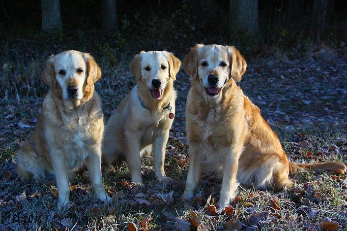 Drei Grazien - sie mögen solche Bilder einfach nicht!