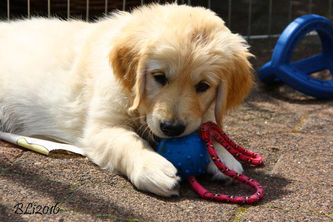 Feenja kann sich immer für Spielzeuge begeistern