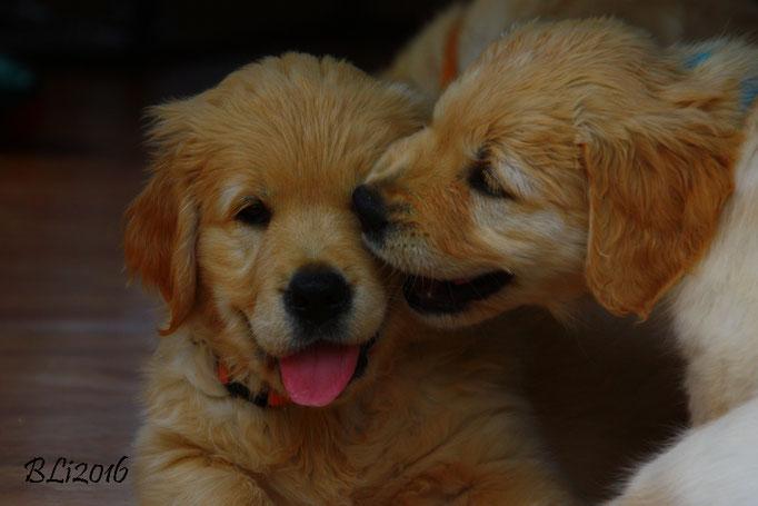 Küsschen für Major