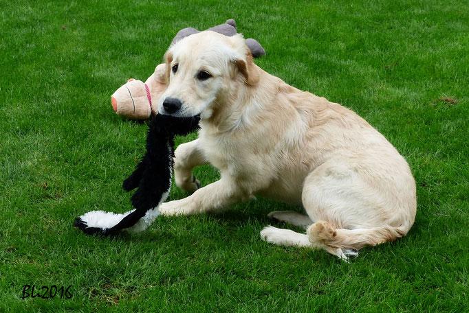 Maisie mit dem ultimativen Spielzeug