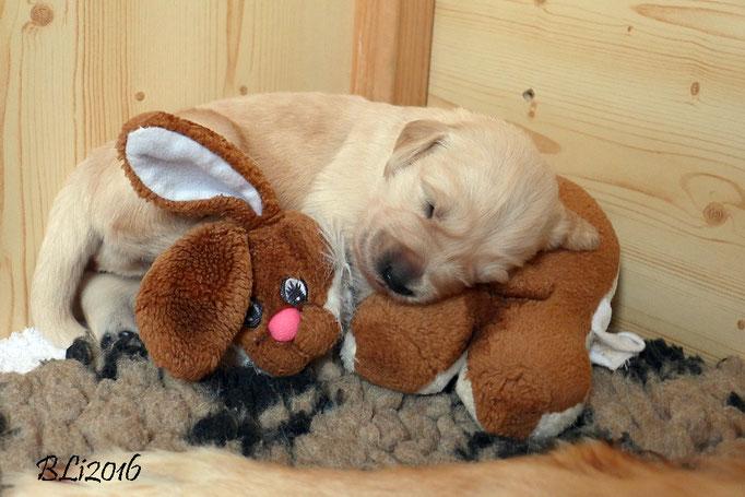 Frau Gelb hat eine sehr gemütliche Schlaf-Position gefunden.