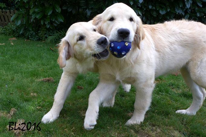 Gerangel oder eins-zwei-drei, wer hat den Ball?
