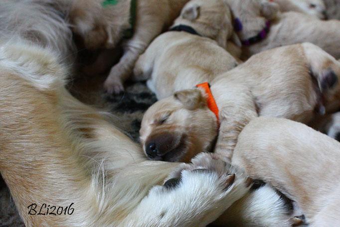 Herr Orange - grinst im Schlaf