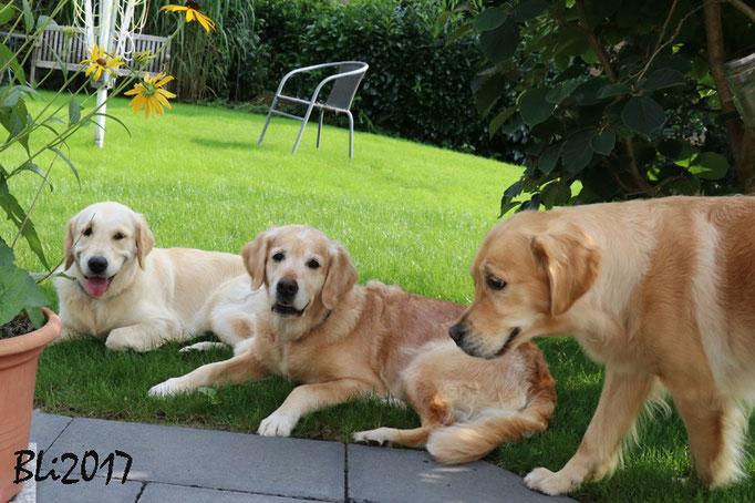 Maisie, Blue und Dina suchen schon wieder den Schatten