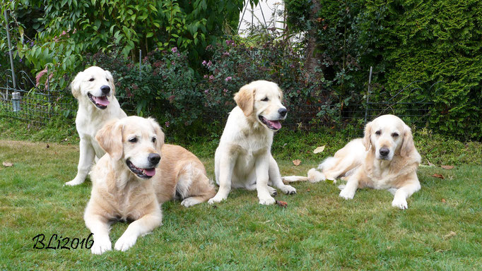 Von links: Keks (Herr Rot), Blue, Maisie, Mia