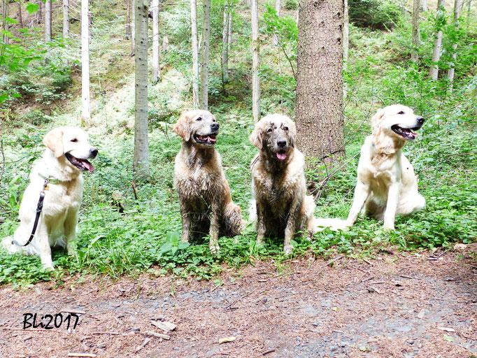 Maisie, Blue, Mia und Milo
