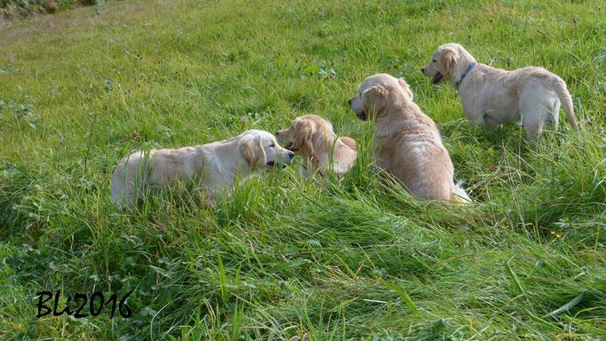 Getuschel im Gras