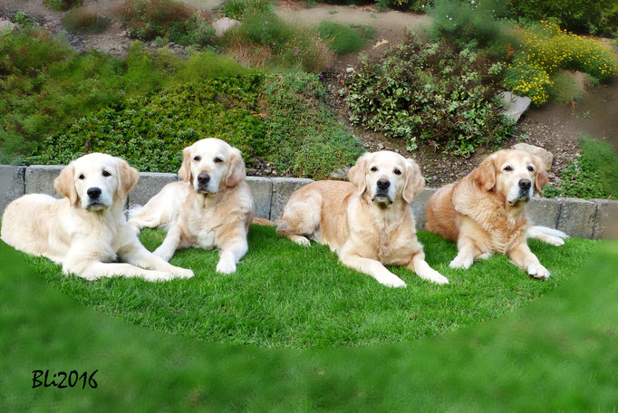 Maisie, Mia, Blue und Balou, für kurze Zeit gebannt
