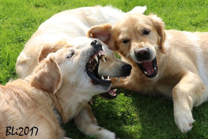 Hundegeflüster