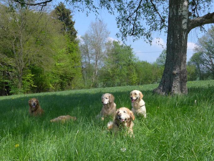 Versuch eines Gruppenbildes...leider war das Gras zu hoch!