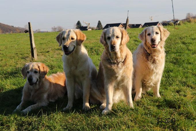 Blue, Maisie, Mia und Annafee