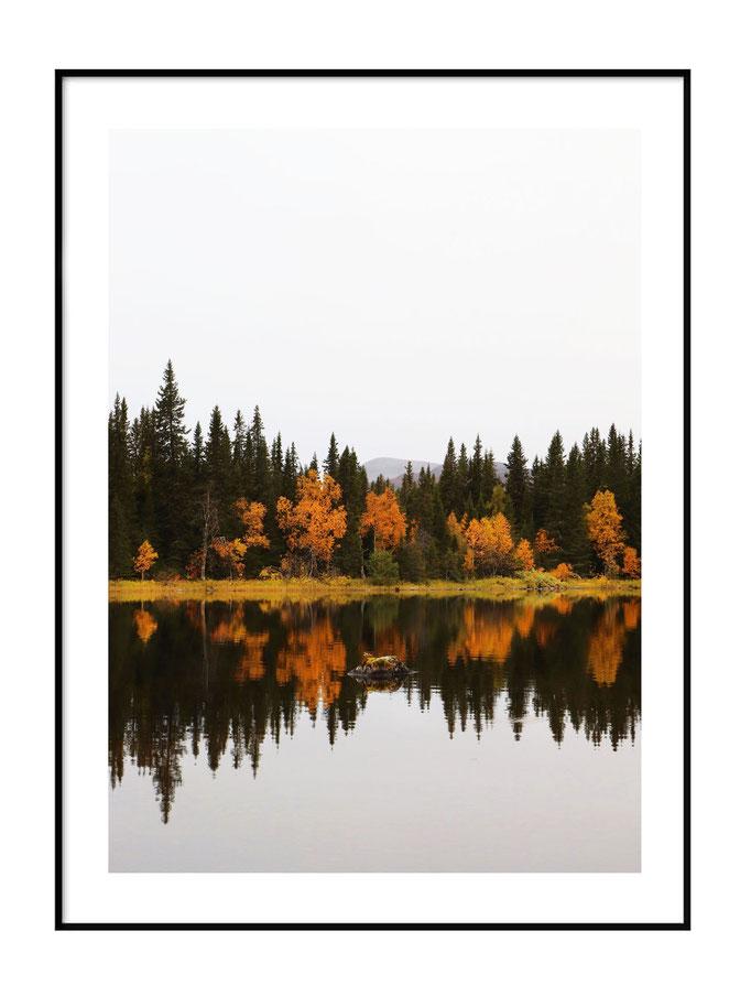 Waldspiegelung