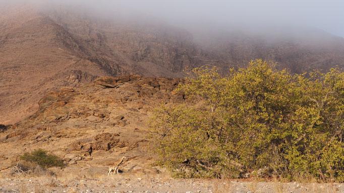 Vallée de la Mudorib ; Namibie
