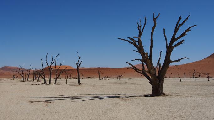 Deadvlei ; Namibie