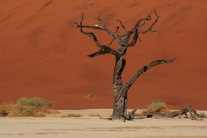 Grande mer de sable du Namib ; Deadvlei ; Namibie