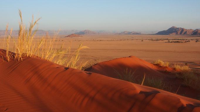Grande mer de sable du Namib ; dune Elim ; Namibie