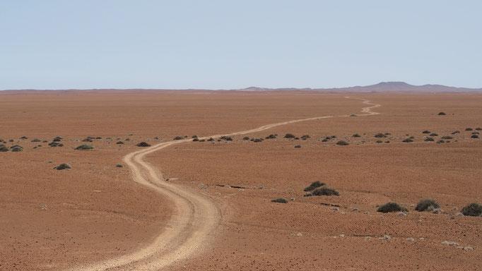 Concession de Palmwag ; Namibie