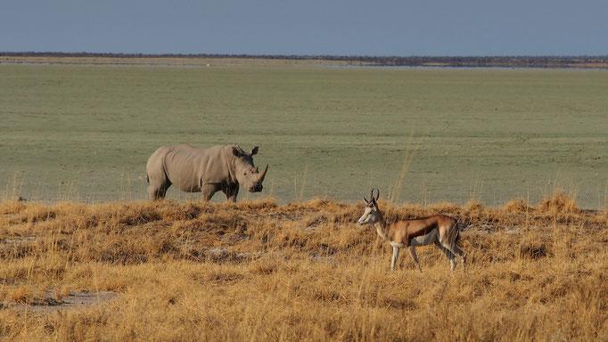 Etosha ; Namibie