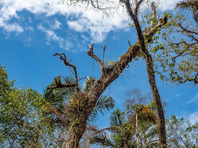 Christmas Island National Park