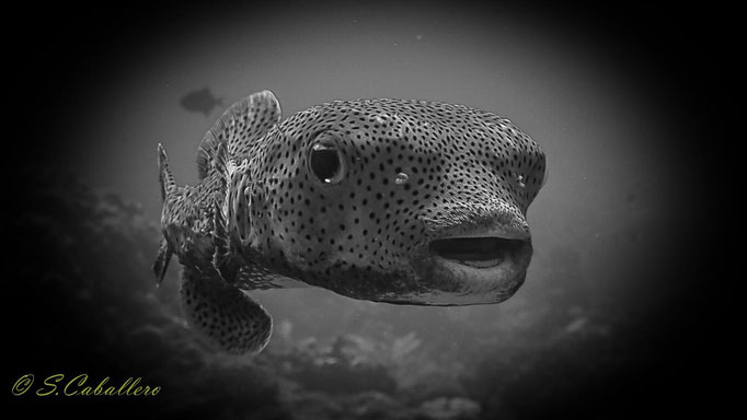 Diving Philippines Apo Reef