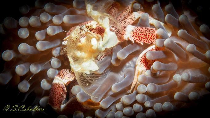 Diving Indonesia Banka Island